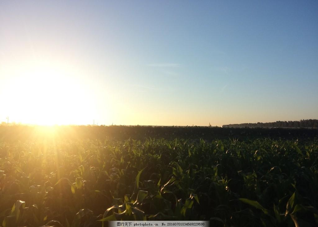 农村的日出 朝阳 晨光 农田 阳光 玉米 山水 风光 摄影