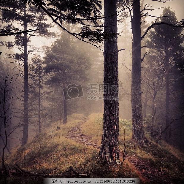 夕阳下的大树林 森林 伍兹 雾 树 自然 径大自然 绿色 心情 清爽 干净