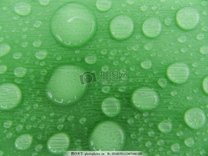 树叶上的小水珠 雨滴 水滴 椭圆形 绿色 颗粒 红色