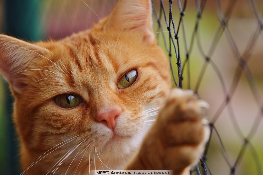 可爱小猫咪图片,可爱小猫咪高清图片素材下载 花猫 萌