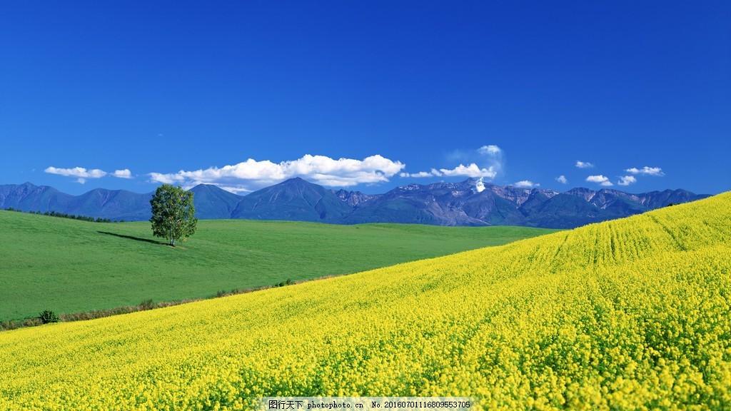 美丽的油菜田风景图片