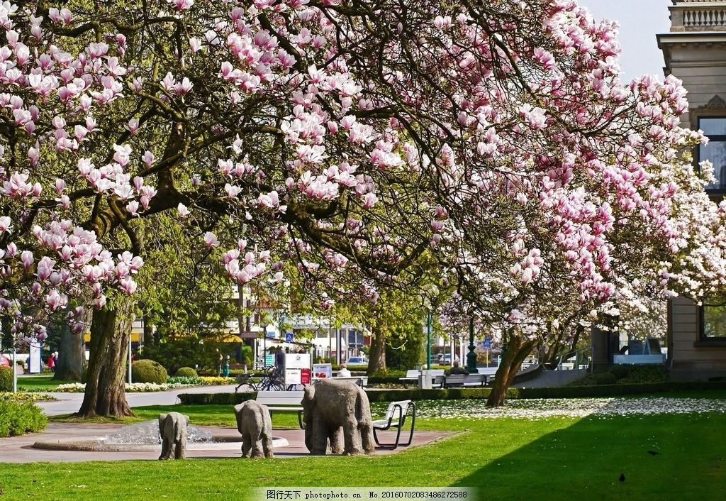 春天风景 春景 玉兰花 草地 阳光 摄影 自然景观 自然风景