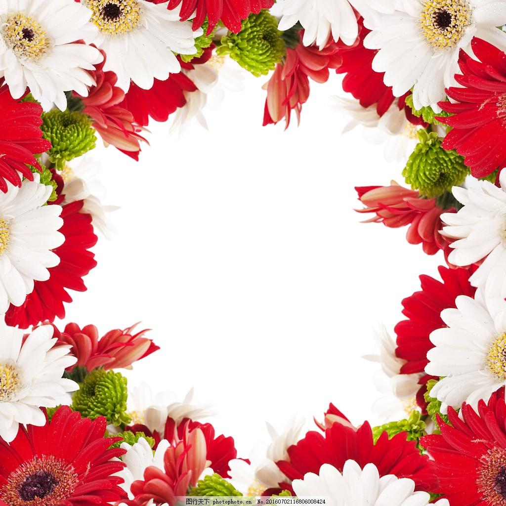 鲜花花框 鲜花图片大全 红色花朵 白色鲜花 唯美花朵