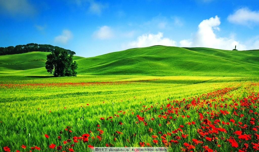 绿地鲜花 蓝天 白云 山丘 绿地 草地 鲜花 摄影 自然景观 自然风景 72