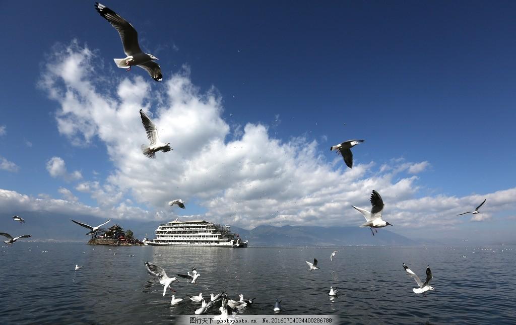 洱海 海鸥 洱海游船 小普陀 蓝天 摄影