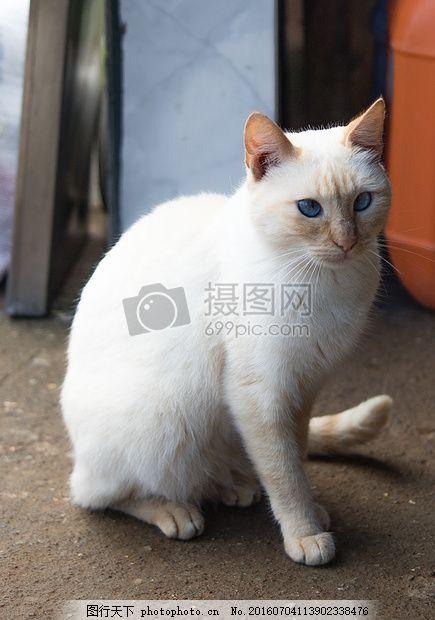 可爱的白色小猫 可爱 小猫 猫类 白猫 动物 猫耳朵 猫眼睛 地面