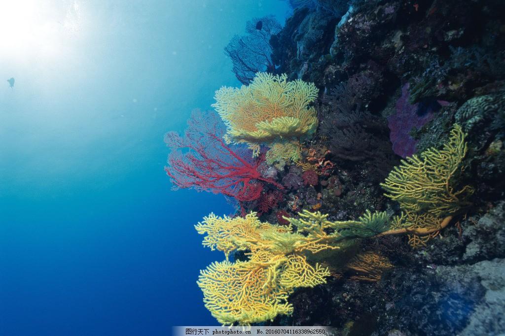 海底世界珊瑚