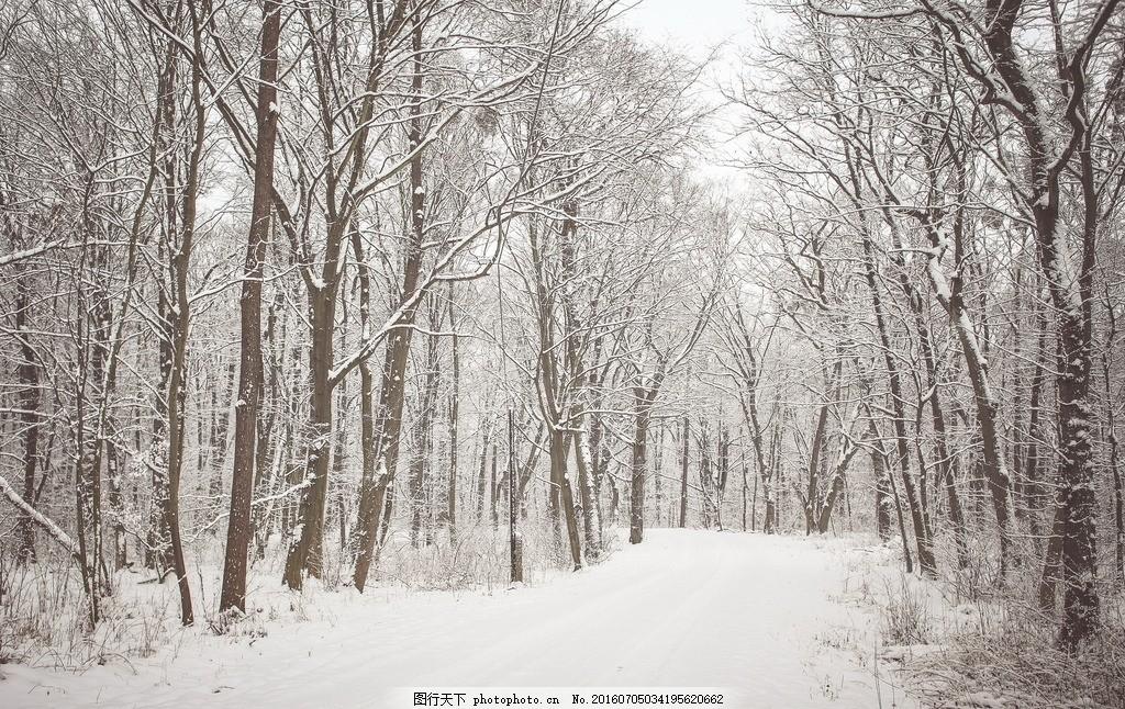 冬天雪地 树林 树木 林木 森林 小树林 冬天树木 冬天树林 树林风景