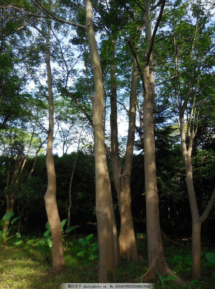 风景 丛林 树 森林 阳光森林 森林背景 绿树林 森林黄昏 tree 莲花山