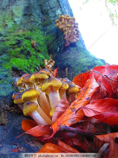 蘑菇 公园 森林 真菌 菌类 野生 特写 毒菌 红色