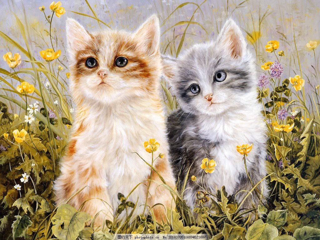 可爱小猫 可爱小猫高清图片下载 萌 宠物 小动物