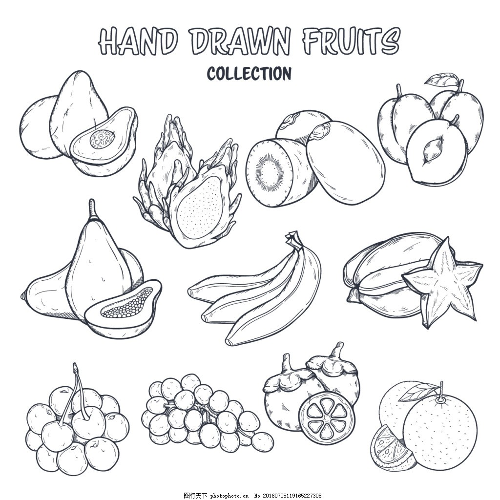 手绘线描水果素材