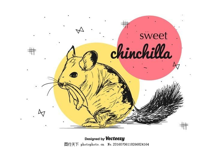 龙猫可爱 文字 字体 插图 黑尾 坐 行 毛皮 毛茸茸的 可爱的 动物园