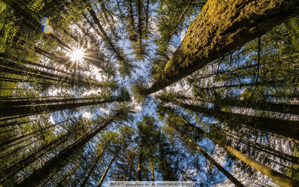 高清森林背景图电脑壁纸5120x3200