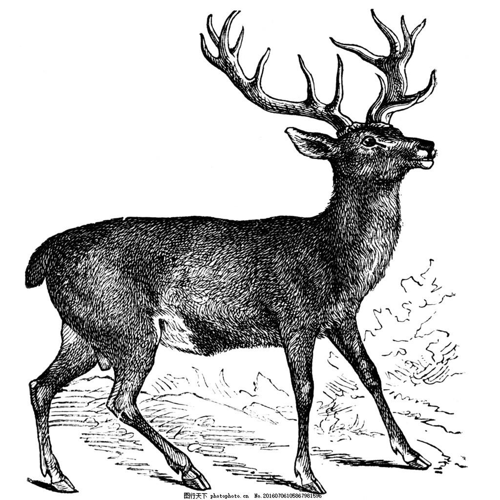 素描绘画行走的鹿 动物 服装图案 位图 野生动物 鹿头 面料图库