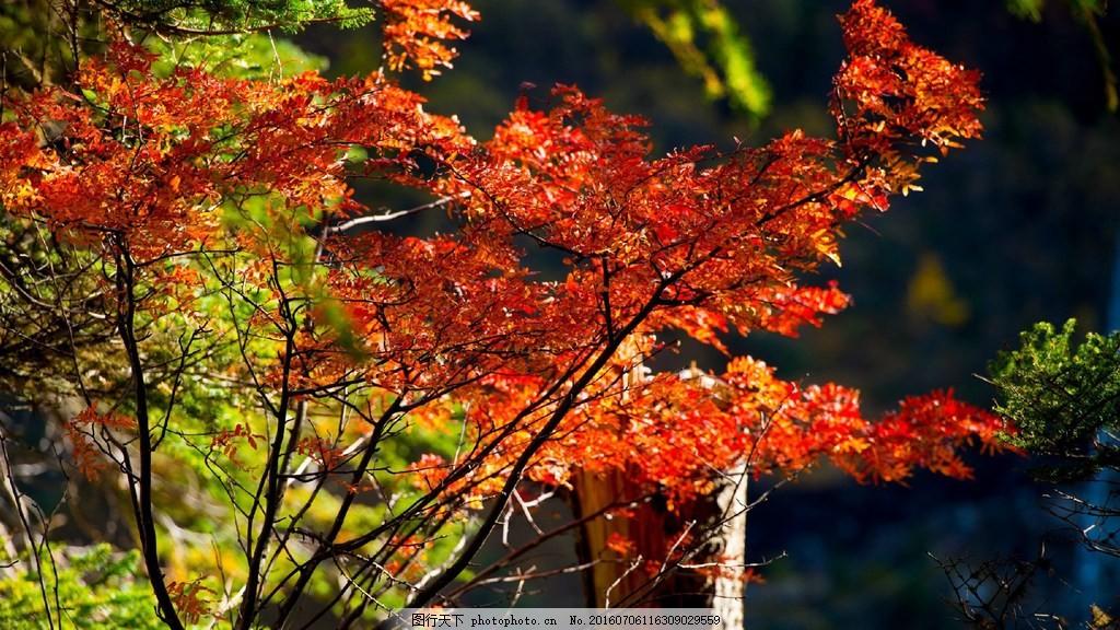 秋季红叶风景图片,秋季红叶风景高清图片下载 秋天