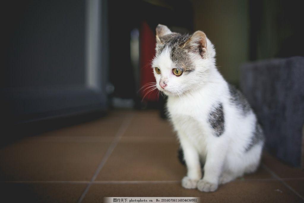 呆萌猫咪图片呆萌猫咪图片免费下载 猫咪 萌猫 萌猫猫 小猫 可爱猫咪