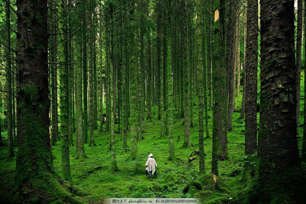 绿色原始森林风景 绿色原始森林风景高清图片下载 树林 树木 大树