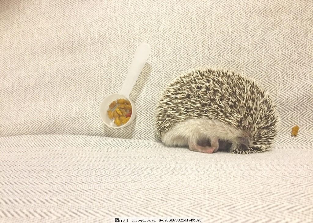 小刺猬 沙发 米黄色 小清新 可爱 动物 面壁思过 摄影 其他生物