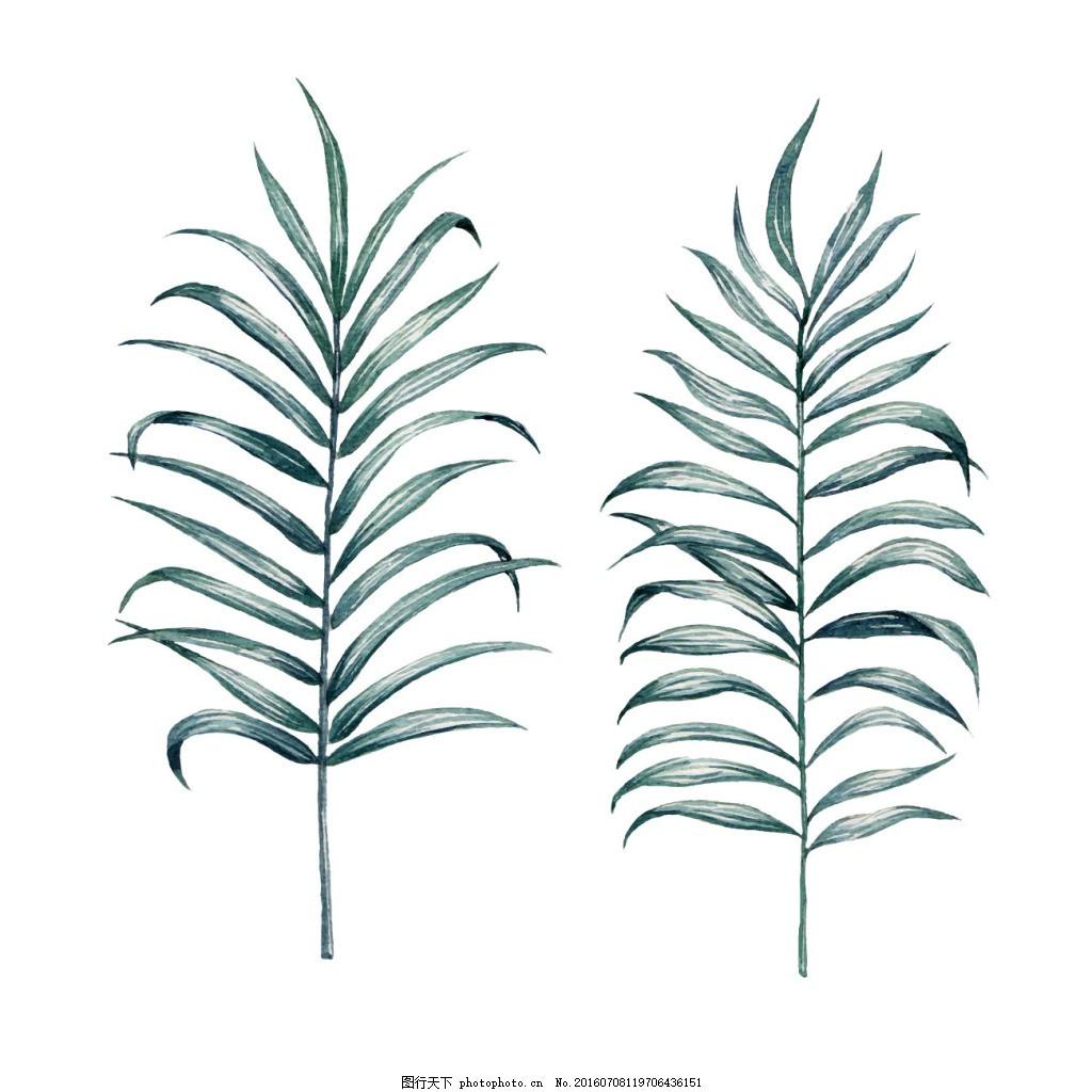 水彩画植物叶子