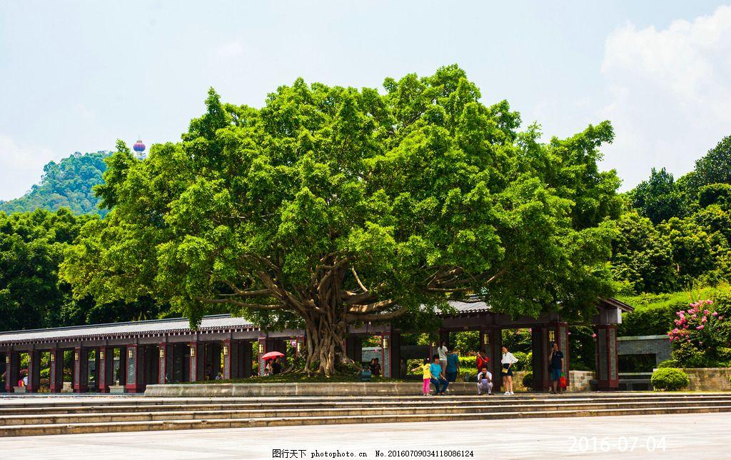 大树 树木 树叶 茂盛 绿化天空 摄影 旅游摄影 自然风景 300dpi jpg