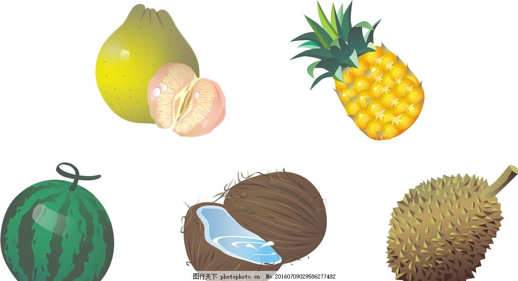 西瓜 椰子 菠萝 柚子 矢量素材 手绘 水彩 新鲜水果素材 矢量水果素材
