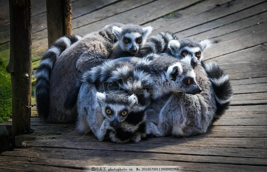 成群的动物