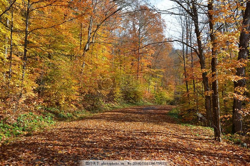林间小道 落叶 摄影 自然 风景 树木 道路 红色