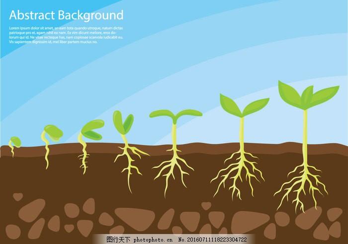 植物生长的概念载体 成长 植物 生长 土壤 年轻 绿色 生命 图 户外 阳光 序列 农业 芽 元 播种 园艺 小 降 森林 堆肥 种子 园林 根 土地 地面 浇注 苗 步 春天 发芽 新叶 环境 生态 种植 苗木 泥土 施肥 清新 自然 背景 植物生长图