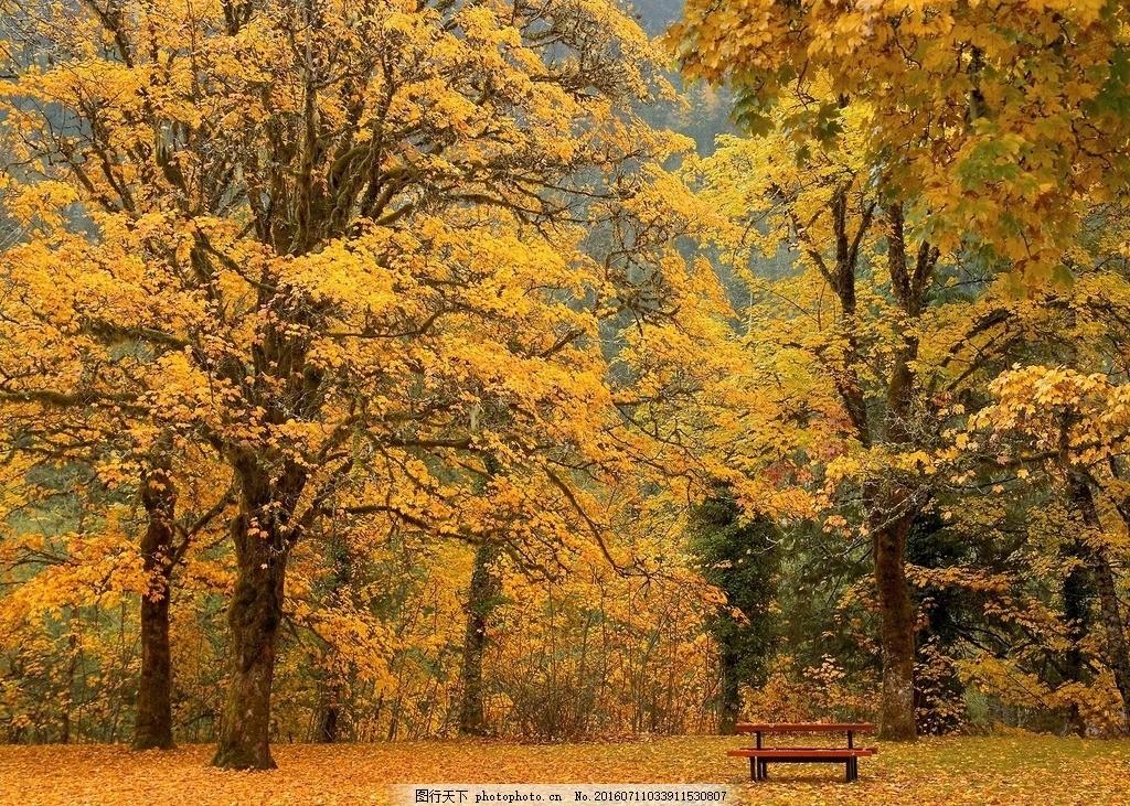 枫树林 植物 植被 树木 枫叶 椅子 风景 摄影 国外旅游