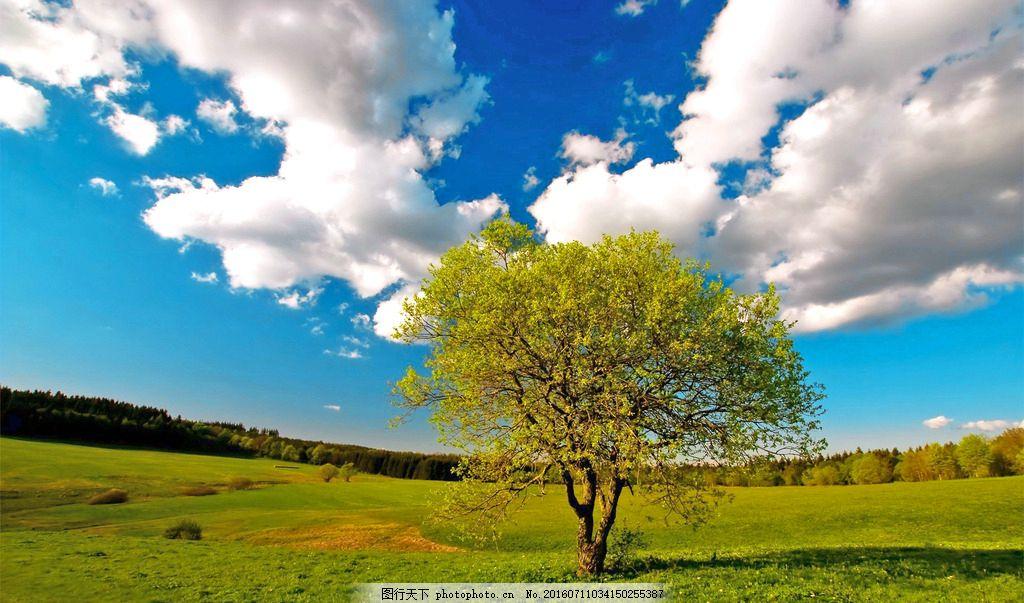 大树 自然 蓝天白云 一棵树 草原 绿色 摄影
