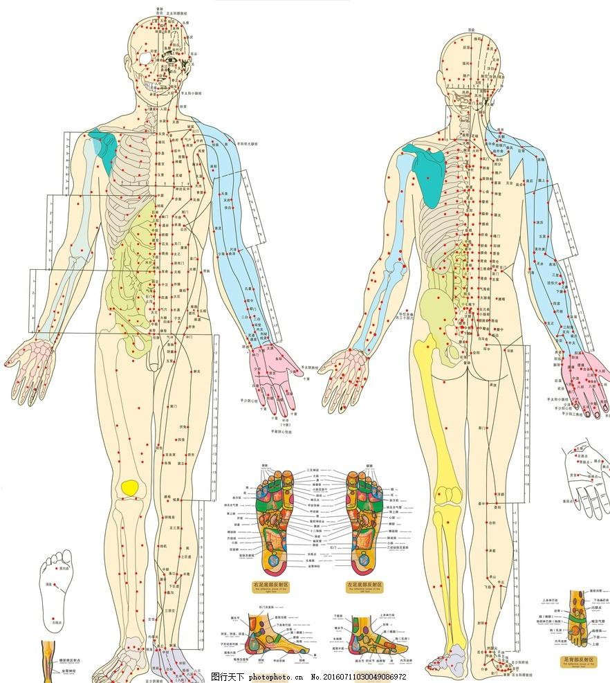 穴位图解大全 经络穴位图 人体穴位图片 穴位图解 人体经络图解 中医