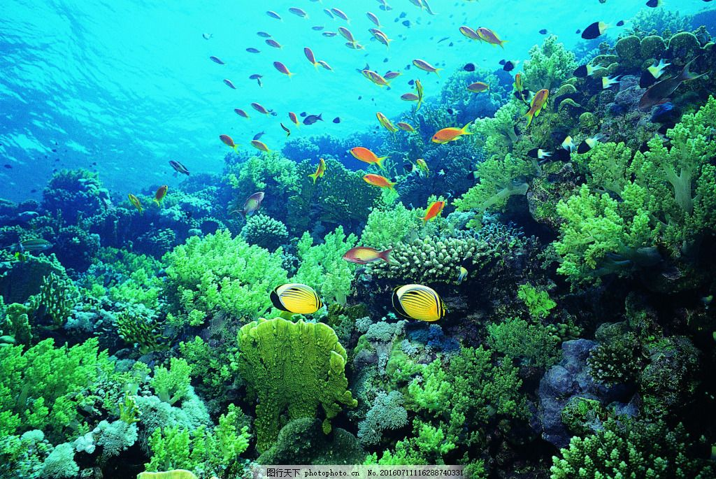 海洋世界摄影图片素材 海底世界 海洋世界 珊瑚 3d海洋 海洋节 海洋