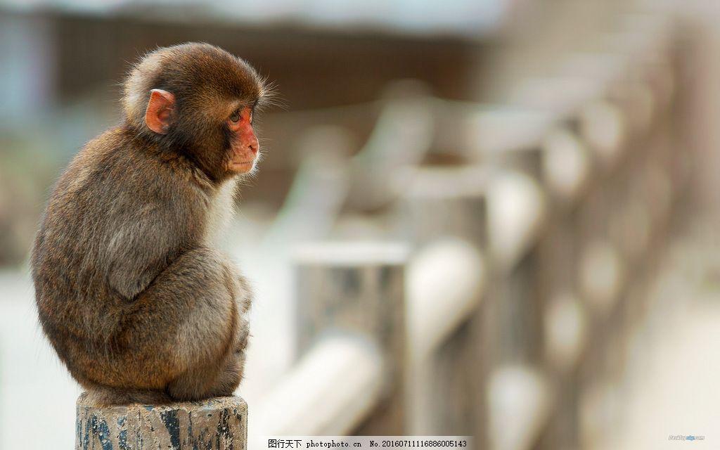 小猴子 呆萌 可爱 猴子 野生动物 保护动物