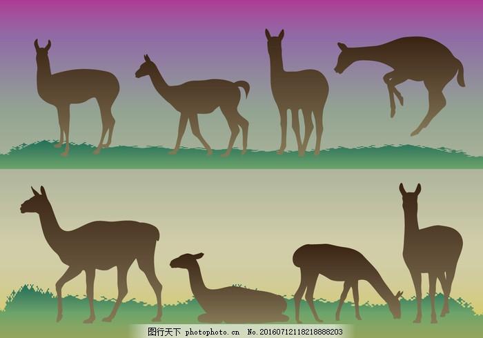 原驼的剪影 羊驼 美国 安第斯山脉 动物 艺术 背景 野兽 黑色 卡通