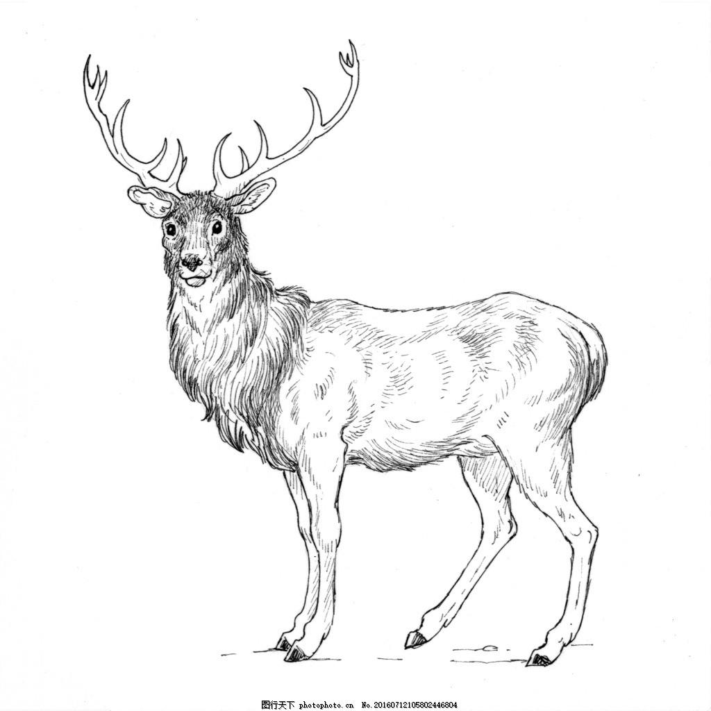 素描绘画站立的雄鹿