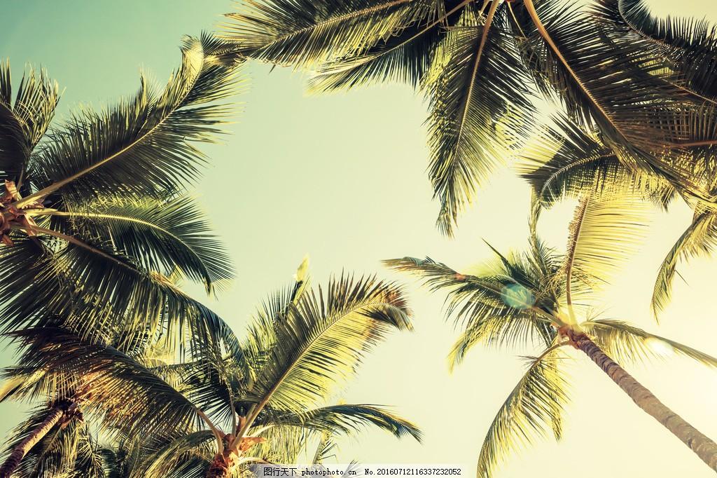 天空椰子树风景图片