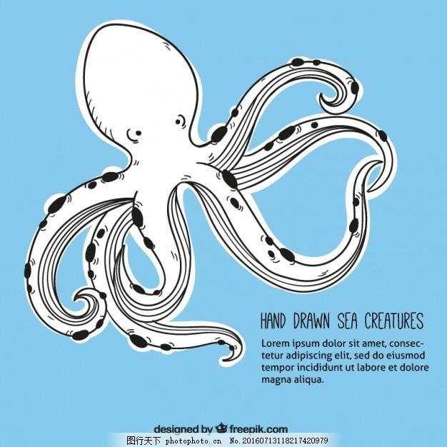 手绘章鱼背景 的背景下 一方面 海洋 动物 手绘的 可爱的 画画
