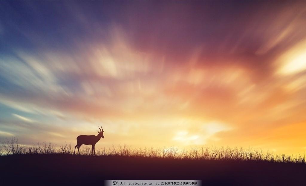 灿烂的天空 动物 夕阳 日落 鹿 摄影