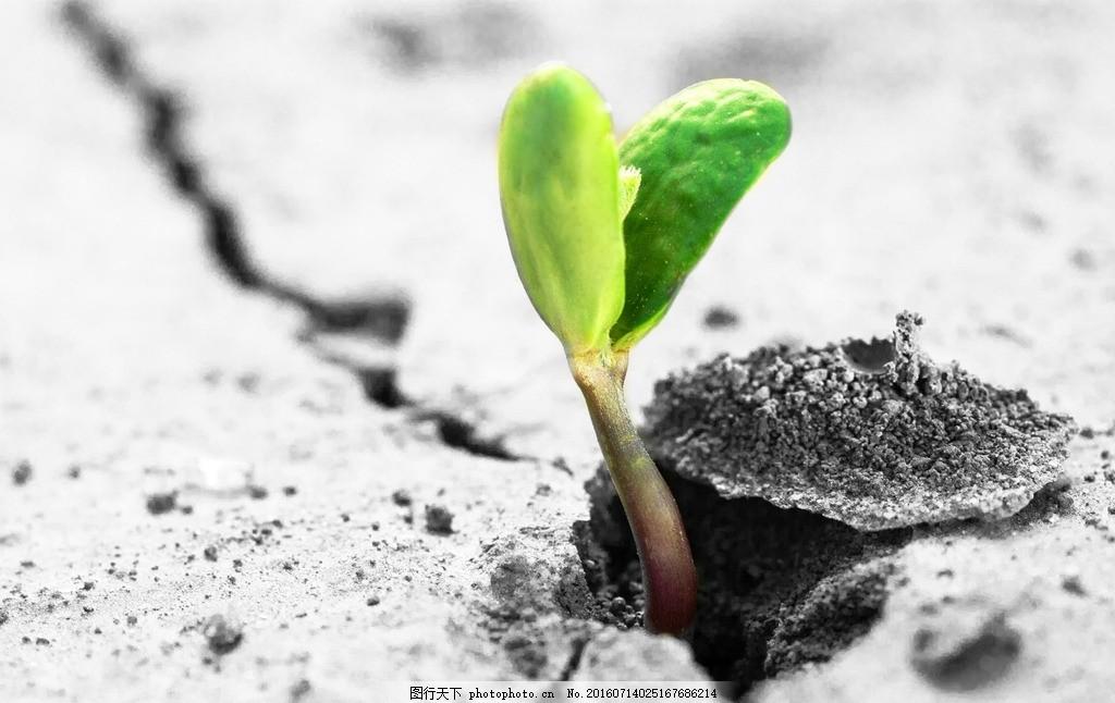 土地里发芽的植物