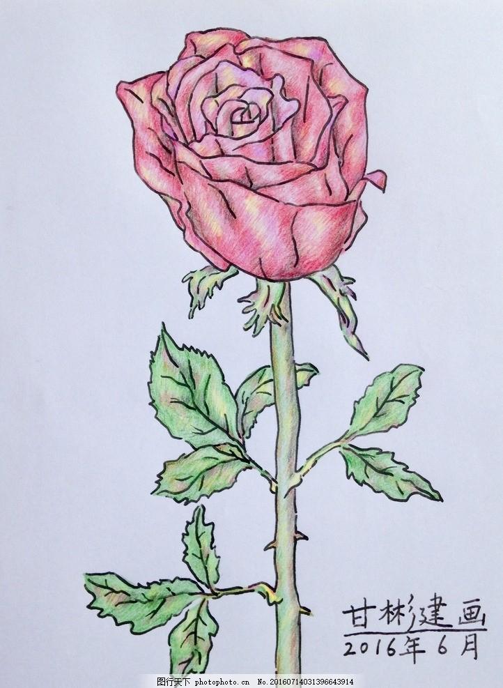 玫瑰花 钢笔彩铅画 绿叶 花卉 绘画书法 钢笔画 钢笔字 甘彬建画