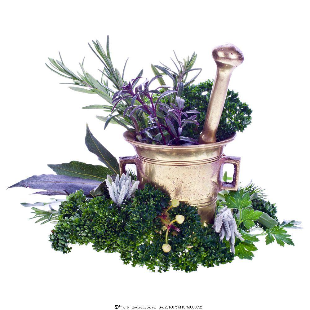 园艺花盆植物图片