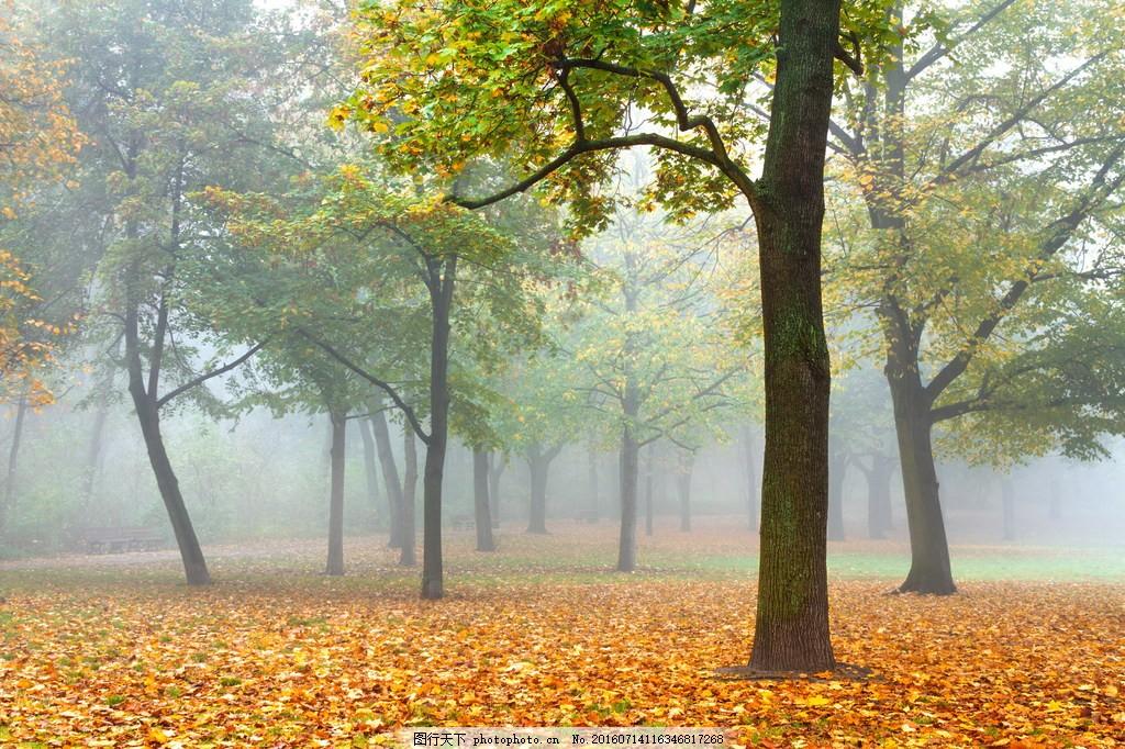 唯美秋天落叶风景图片