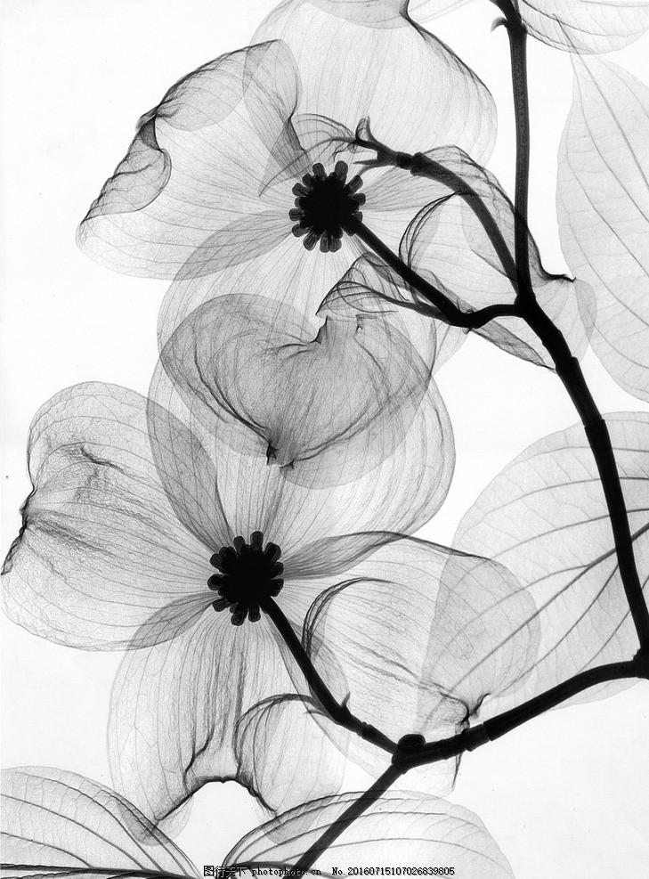 手绘花 花卉 花朵 梅花图片 灰色花朵 花朵图片 手绘花朵 文化艺术