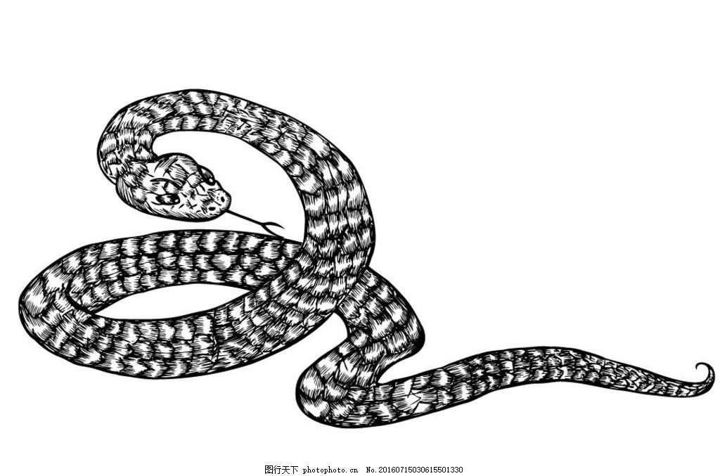 黑白蛇纹身 剪影 矢量 黑色 手绘 线条 矢量素材 图标 黑白剪影