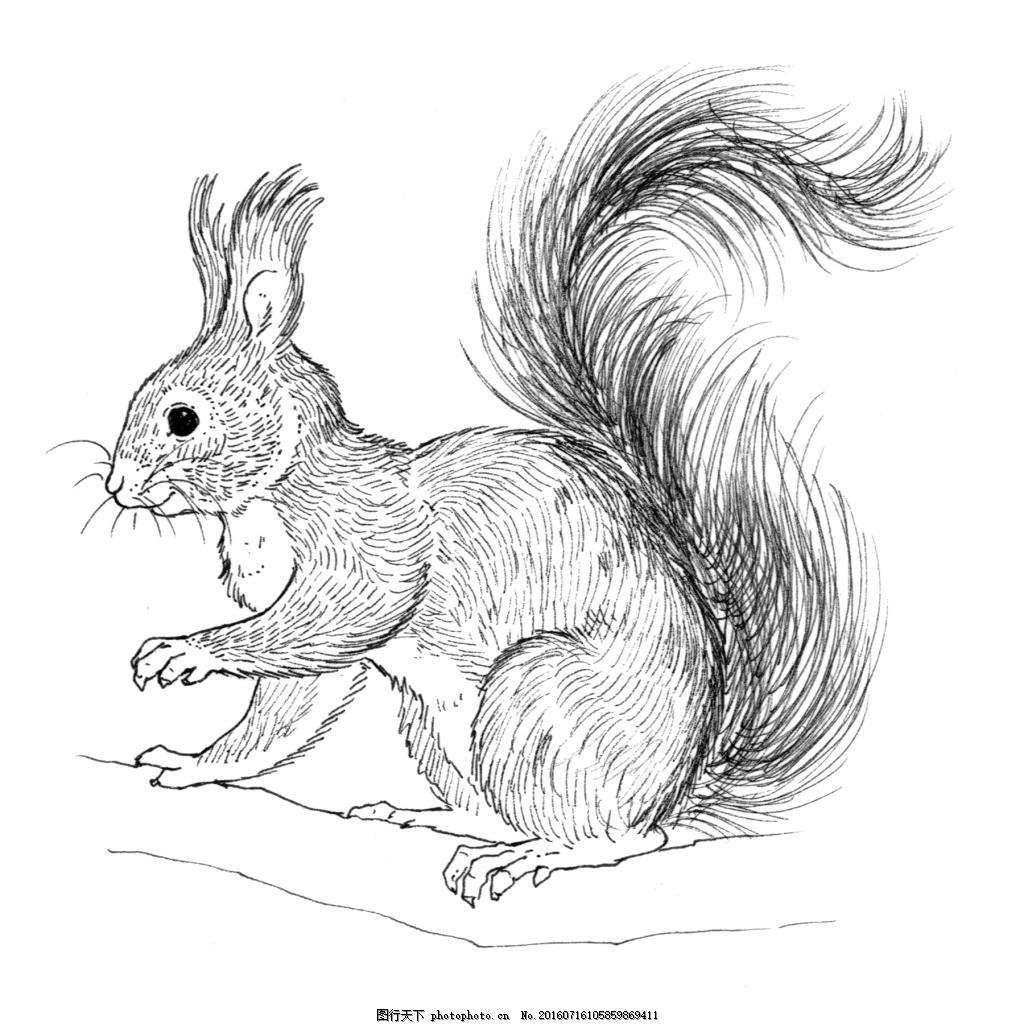 素描树上的松鼠 动物 服装图案 位图 野生动物 树松 动物服装图案