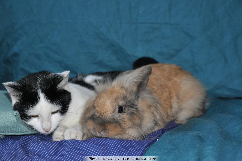 可爱小猫小兔图片