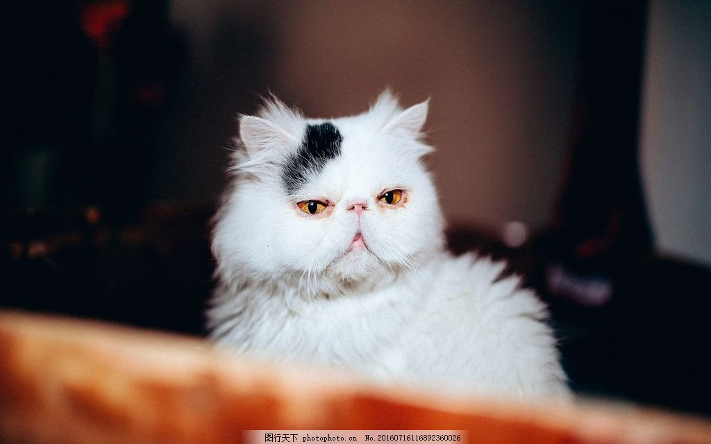可爱小猫咪图片