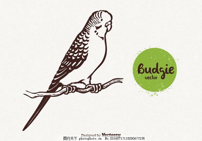 自由的鹦鹉插画矢量图 虎皮鹦鹉 矢量绘制 手绘 素描 羽毛      漂亮