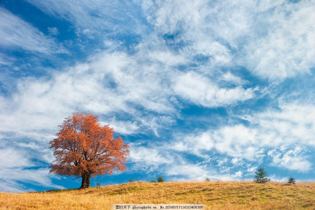 唯美秋天树木风景图片素材下载 天空 秋季 蓝天 白天 云层